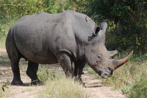 Far and Wild Safaris Blog: Mala Mala Rattrays : May 2010