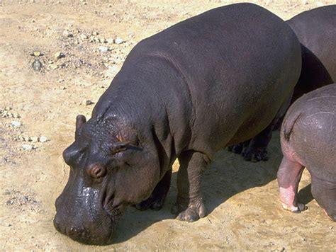 animals in danger of extinction Zoo Animals