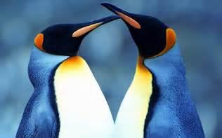 Amazoncom penguin wallpaper Apps amp Games