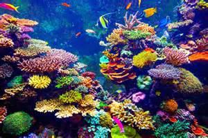 3 Fun Ways to Enjoy Singapore's Marine Life Shape Singapore
