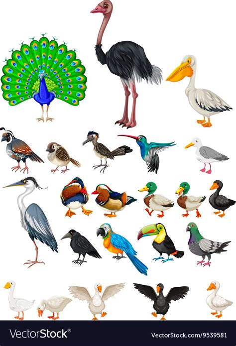 Different Kind Of Birds types of birds learning the names