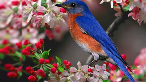 Free Winter Birds Desktop Wallpaper WallpaperSafari