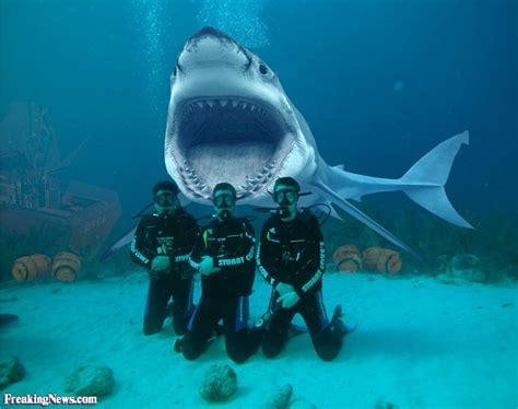Shark Diving Pictures Gallery Freaking News