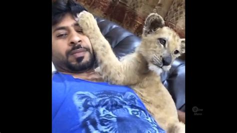 LIVING WITH LIONS Pet Wild Animals Wealthy Lifestyle