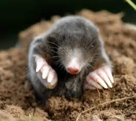 Mole in the Library! Beloved of Beasts