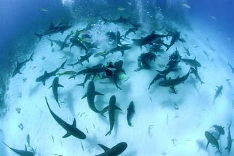 Shark Adventure Stuart Cove's Scuba Dive with Sharks