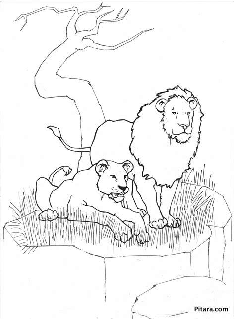 Wild Animals Coloring Pages Pitara Kids Network