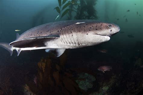 Everything You Need to Know About Shark Diving Diviac