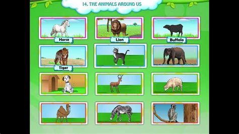 Animals for Kids Learn Animals The Animals Around Us