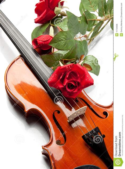 Violin and rose stock photo Image of flower, lyric