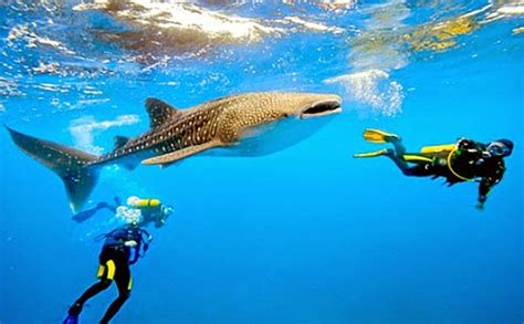 Top 10 Most Popular Dive Sites in the Philippines