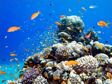 Diving in the Red Sea Israel Foreign Affairs