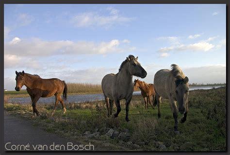 Paarden, horses, wallpaper, background, achtergrond