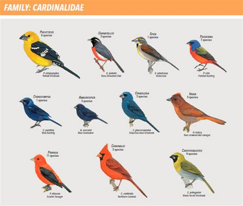 Different Kinds Of Birds And Their Names wwwpixshark
