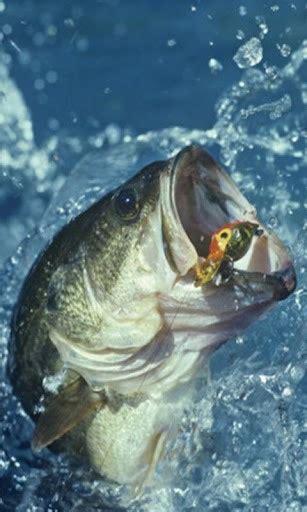 Bass Fish Live Wallpaper Xpx 30024