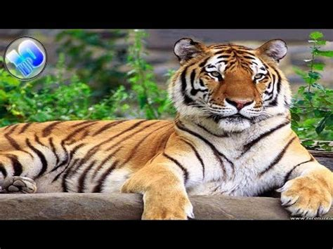 Top 10 Animals in Danger of Extinction YouTube
