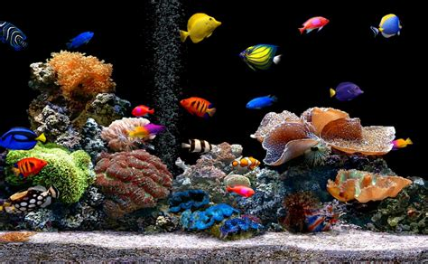 Tropical Fish Wallpapers Wallpapers Gallery