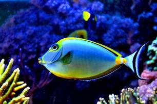Colorful Tropical Colourful Fish colorful fish in the