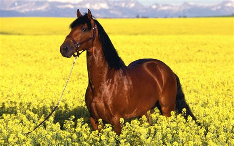 Most Beautiful Horse HD Wallpapers Pictures & Images