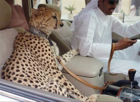 UAE Mulling New Law to Limit Ownership of Wild Animals