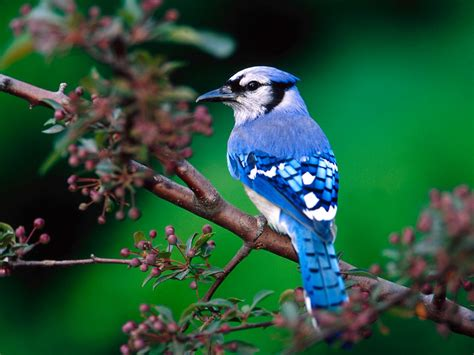 Birds In Nature Beautiful Cool Wallpapers