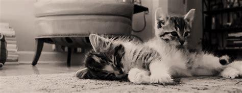 cuddling cats gifs WiffleGif
