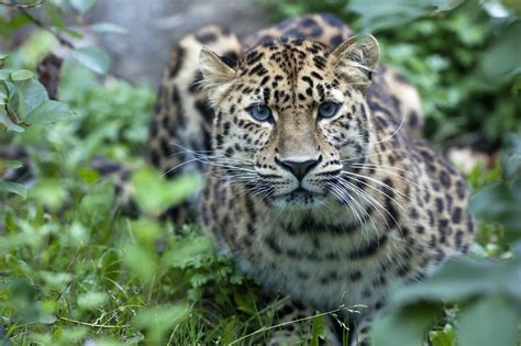 Endangered Species Day 2016: The 17 most endangered