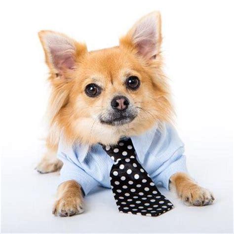 Hugo Puppy Dog (@HugoPuppyDog) Twitter