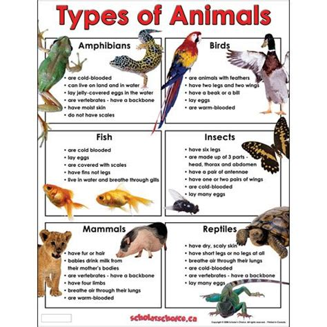 Types of Animals Chart Learning About Animals