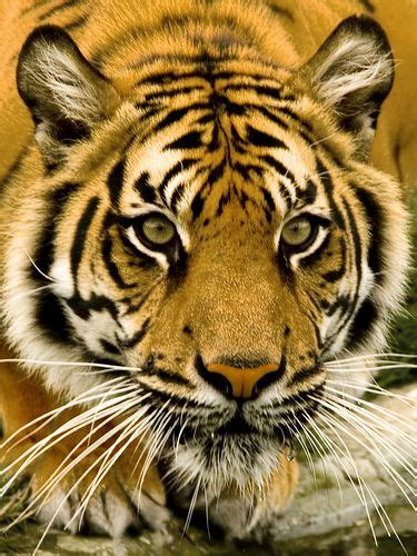Wild Animals Are Not Pets Science Smithsonian