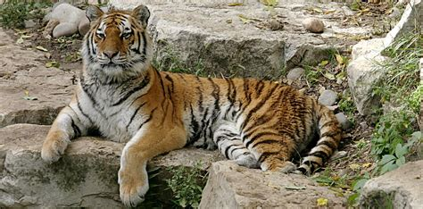 Top 10 endangered animal species Top 10
