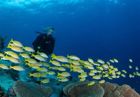 Diving and yoga retreat Raja Ampat Biodiversity Eco Resort