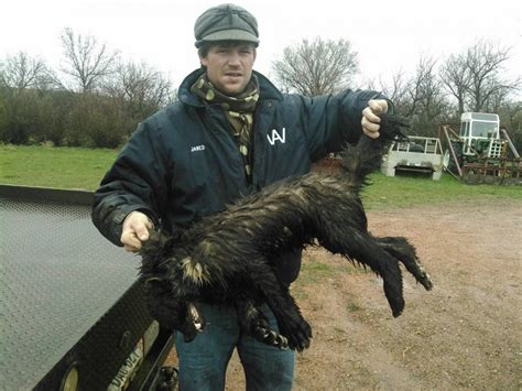 North Dakota Ranch Hand Shoots Strange Animal Attacking