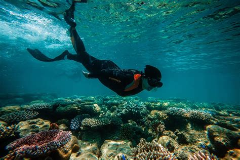 Snorkeling Tubbataha: Exploring Palawan's Coral Garden of
