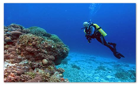 Top 5 Dive Spots in Cebu, Philippines Cebu City Tour