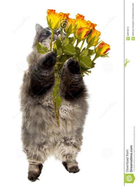 Tabby Cat In Flowers Royalty Free Stock Image