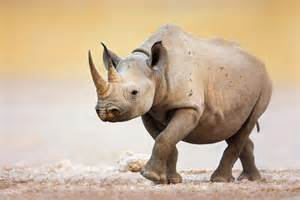 Endangered Species Seven Natural Wonders
