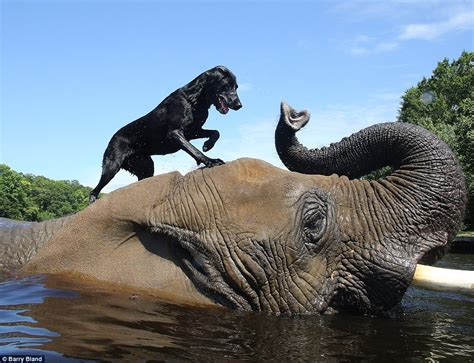 Dog and Elephant Become Best Friends