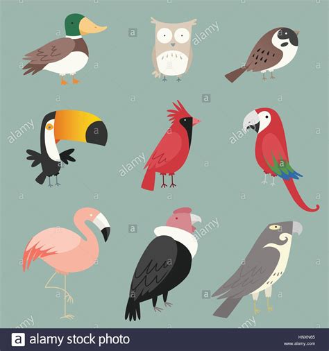 Cartoon species Bird collection With nine (9) different