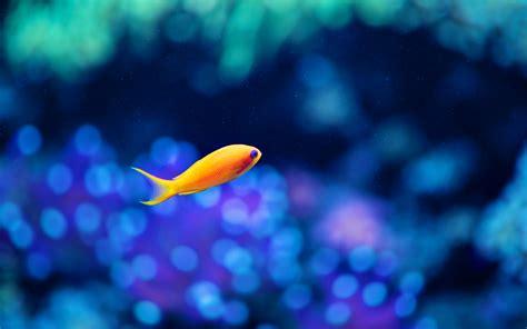 Cute Fish Wallpaper Yellow #10687 Wallpaper WallDiskPaper