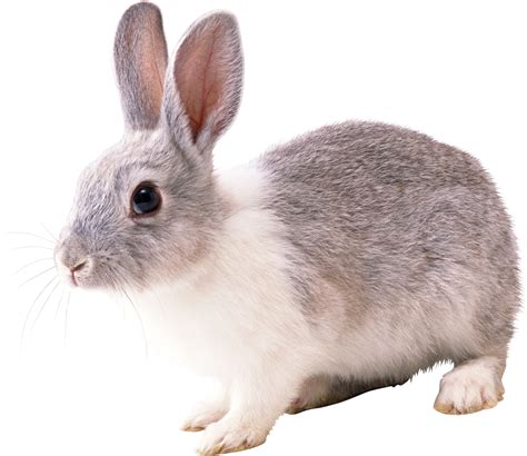 Rabbit In PNG Web Icons PNG