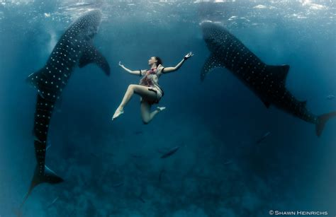 Whale Shark Fashion Shoot World First! Blue Sphere Media