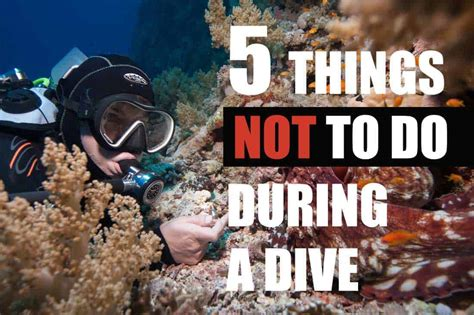 The 5 Things You Should Not Do While Diving? DIVEin