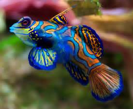Top 10 most Beautiful and Colorful Fish
