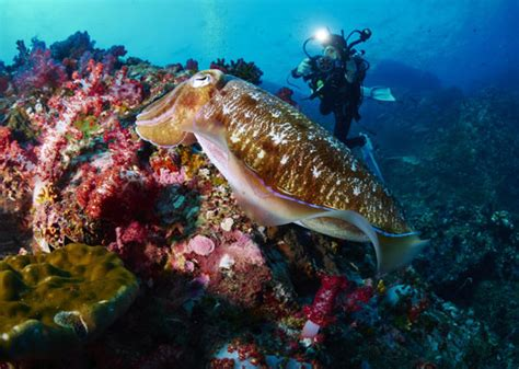 Diving in Thailand Dive The World Vacations