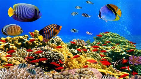 Underwater World Corals Tropical Colorful Fish Hd Desktop Wallpaper : Wallpapers13com