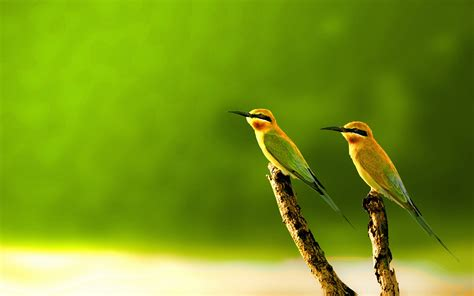 15 Beautiful Birds Wallpaper Collection [HD Edition] Stugon