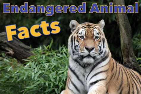 Kids Planet Especies Animal Fact Sheets Autos Post