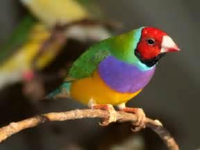 Green Indian Ringneck Parakeet  The Finch Farm