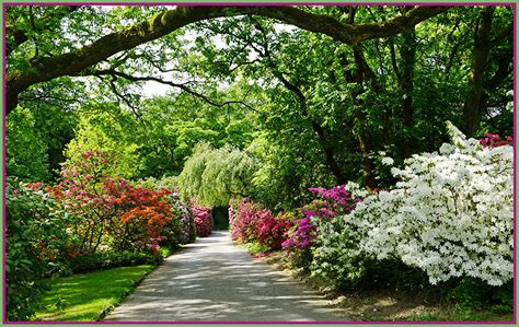 Pictures Germany Grugapark Essen Nature Parks Rhododendron